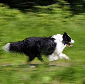 Animal Speed