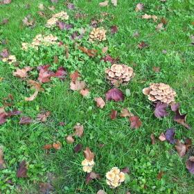 Houby v trávě