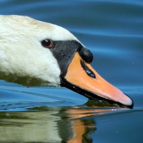 filtrace místního rybníku