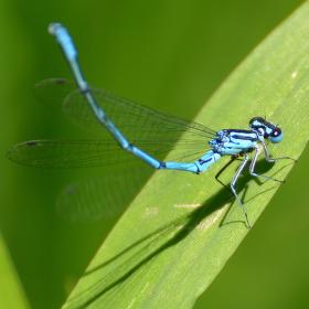 Vážka v trávě