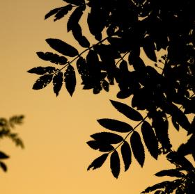 Západ slunce za listy