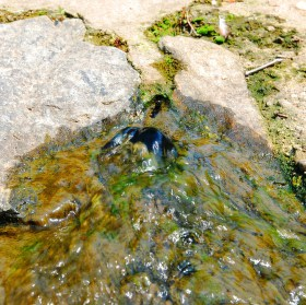 Splav na řece Doubravě (Ronov n. D.)