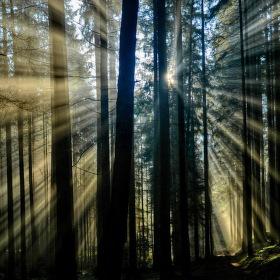Lesní průsvit