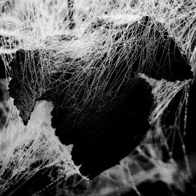 Pavoučí umění