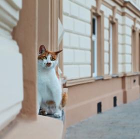 kočičí street