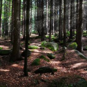 Mumlavský les