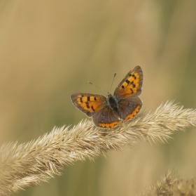 Motýlová...