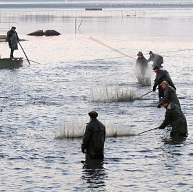 rybyčky, rybyčky, rybáři jedou