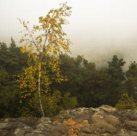 Mlhavé ráno na Čapu