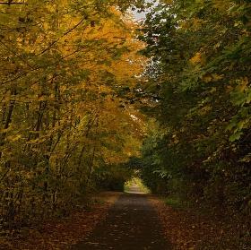 Podzimní lesní cesta