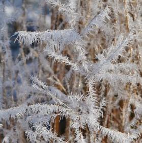 Paní zima tvoří jemnou krásu jak z prachového peří:-))