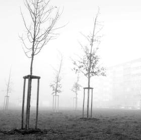 ...když kreslí mlha...