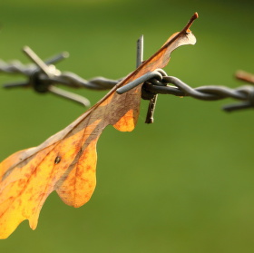 Vzpomínka na slunečný  podzim