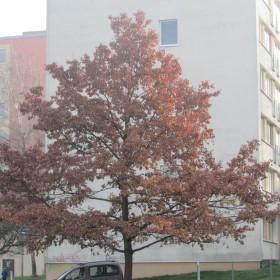 Strom V Prosinci
