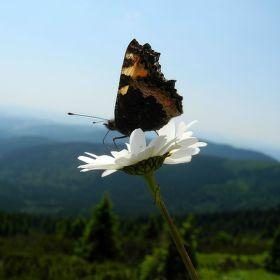 Motýl s výhledem