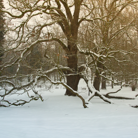 Čarostrom 4 - čaruje v zimě ....