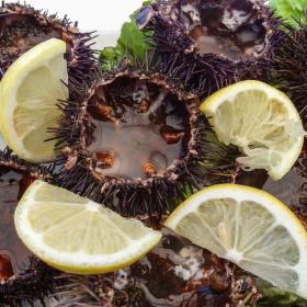 Mořští ježci......lahůdka, něco jako ústřice.