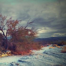 Poustni strom