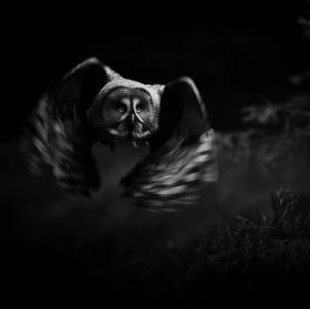 Noční lovec II.