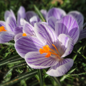 Jarní potěšení