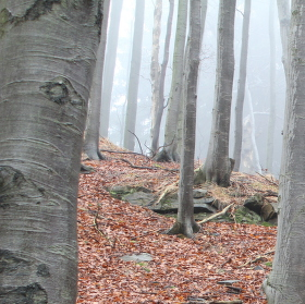 Prosincová příroda