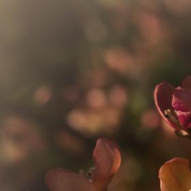 Jarní květy...