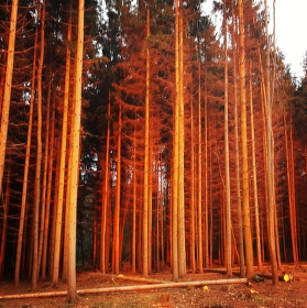 Les, to je základ.