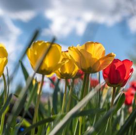 Rozkvetlý den v podobě květin