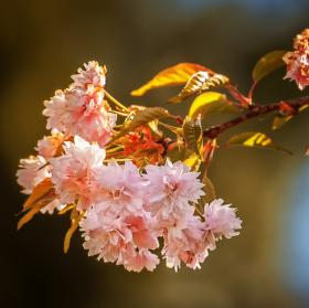 Jaro je tady III - sakura