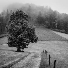 Cestou kolem stromu...