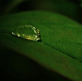 Dešťová perla