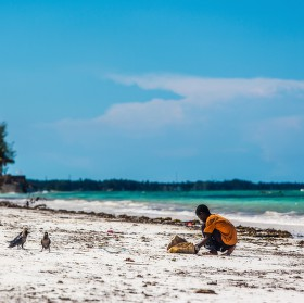 Sbírání řas - Zanzibar