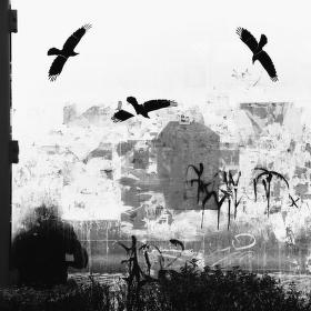 o ptácích