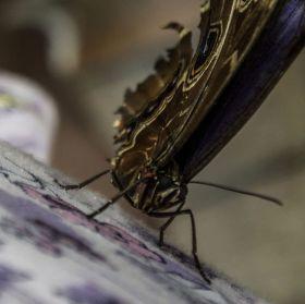 Ja Motýľ