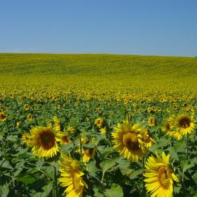 Žlutý horizont
