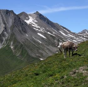 Alpská pastva