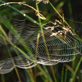 pavučinový obláček