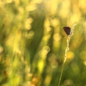 Někde v trávě ...