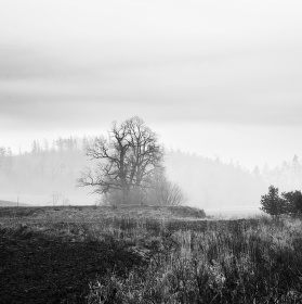 V polích