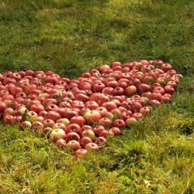 Jablíčka malované