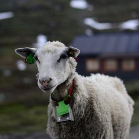 portrét ze severských pastvin