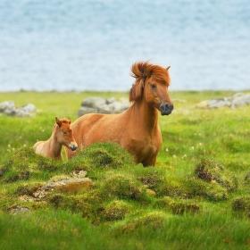 obrázky z islandské přírody 31 aneb ... ona a ono na břehu moře