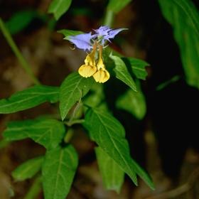 barevná květina