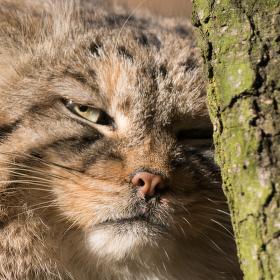 """Grumpy cat aneb """"Nemám na vás náladu"""""""