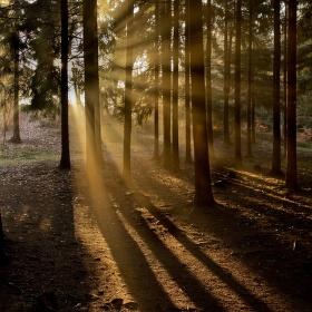 Světlo v temném lese