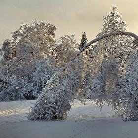 Krutost zimy