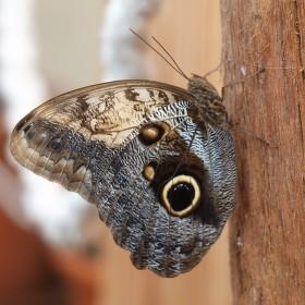 Motýlek na kůlu