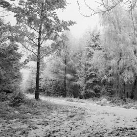 Lesní pohoda a klídek