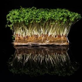 Vitamínový prales-odrazovka.