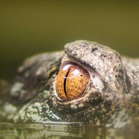 Vidím tě!